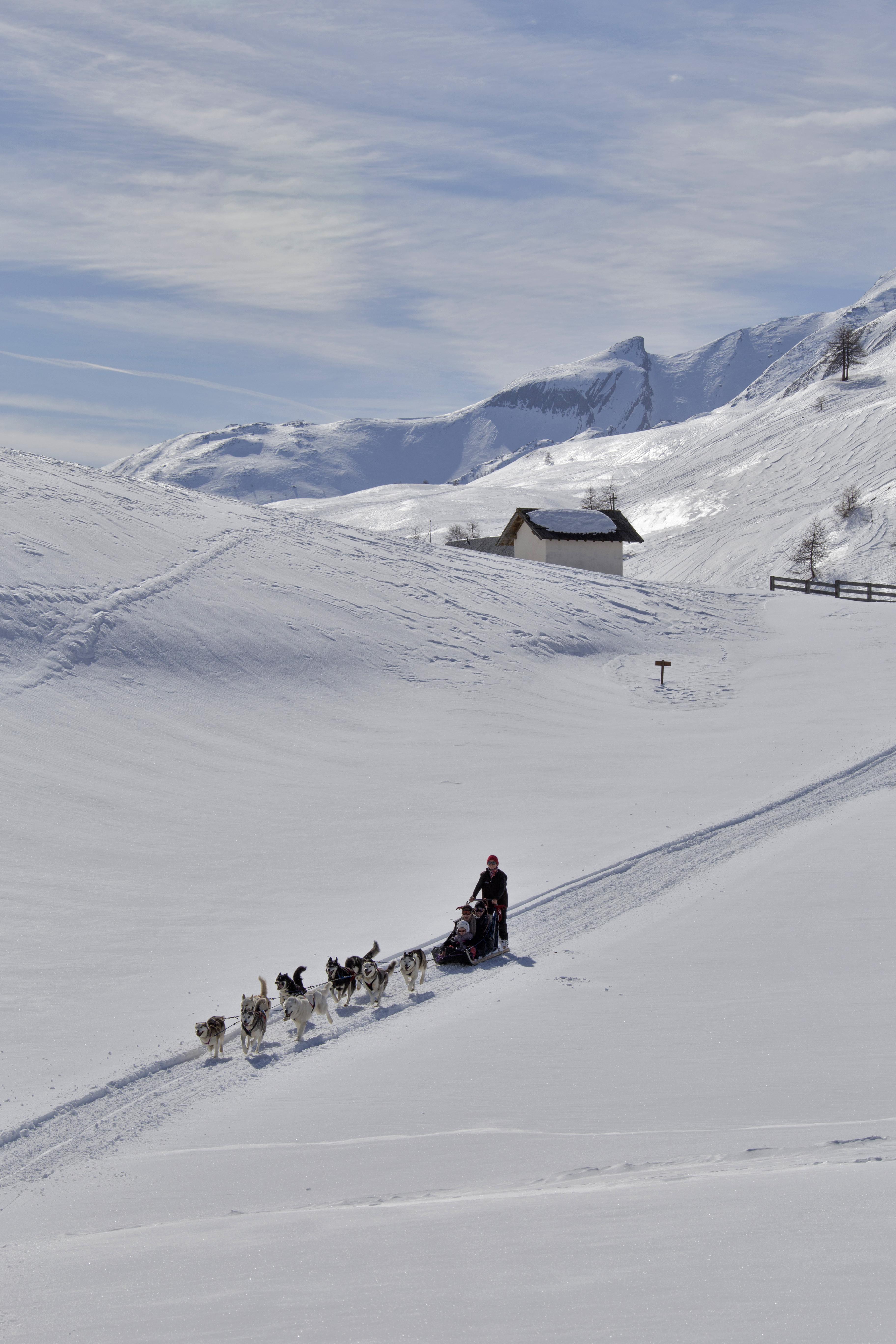 femme clair et distinctif Couleurs variées Chiens de Traîneau / Dog Sledding – Huskies à Barcelonnette ...